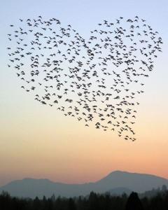 foto vogels